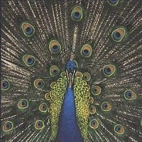 Bluetones - Expecting To Fly